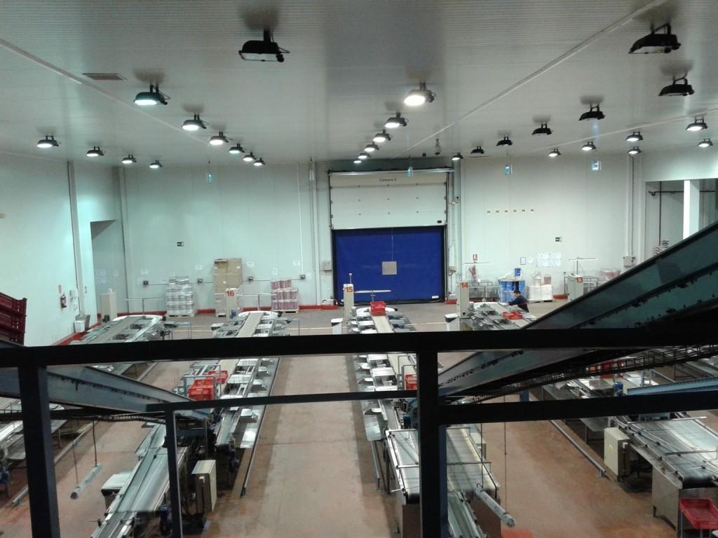 Central Hortofrutícola. Auditoría energética
