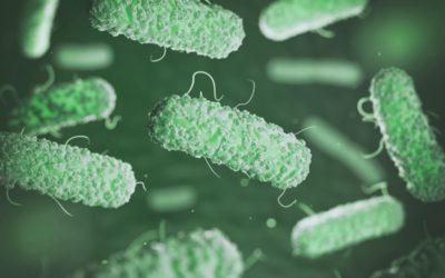 Control y prevención de la Legionella: una bacteria peligrosa de la que debes protegerte